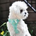 Doggie Design(ドギーデザイン)American River Harness Teal Polka Dot アメリカン リバー ハーネス ティール ポルカドット