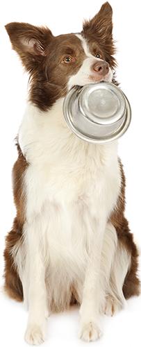 皿をくわえる犬