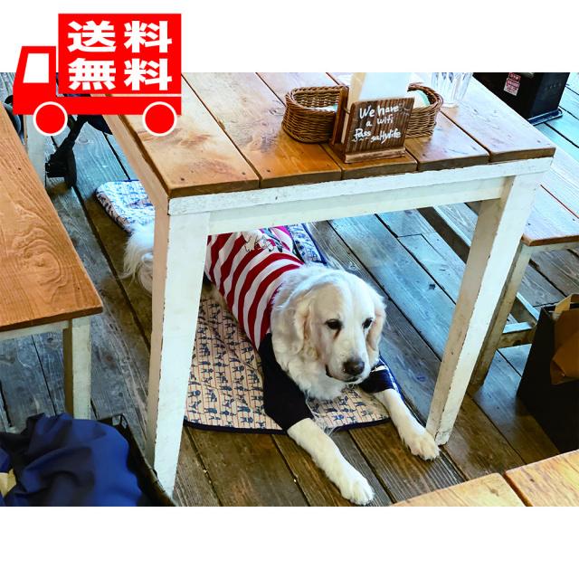 【送料無料!】盲導犬チャリティーひんやりブランケット ネイビーLLサイズ