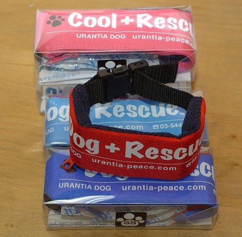 保冷剤で首を冷却するDog+Rescueクーリングカラー バックル式SSサイズ