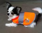 大特価!わんちゃん用の安全服☆Dog Safety Vest 201 orange【メール便可能】