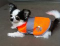 犬用の安全服☆Dog Safety Vest 201 orange【メール便可能】