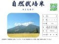 自然栽培米(玄米10㎏)