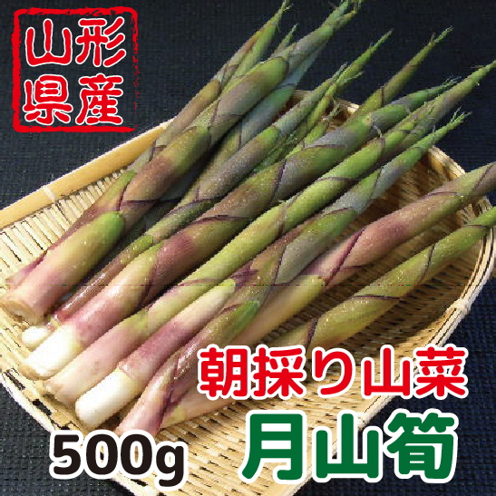 朝採り 新鮮 山形県産山菜 月山筍 500g