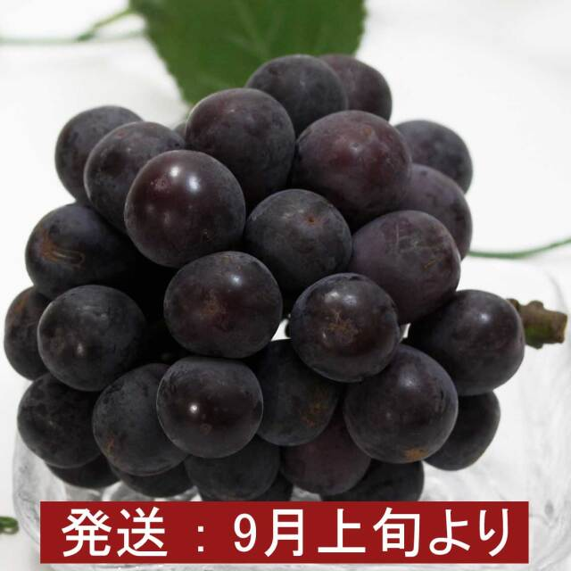 山形県産 種なし『ピオーネ』 3~4房入り (約2kg)【ギフト、お祝い、化粧箱、贈答用】