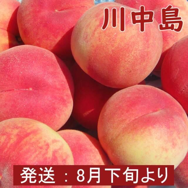 川中島(白桃)8玉 3kg【ギフト、お祝い、化粧箱、贈答用】
