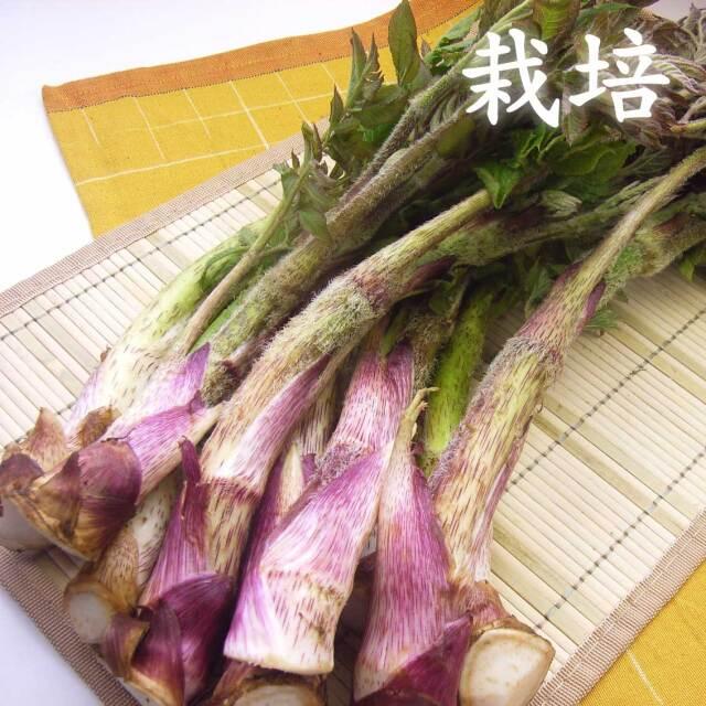 【栽培】朝採り 山形県産 山菜 うど 500g