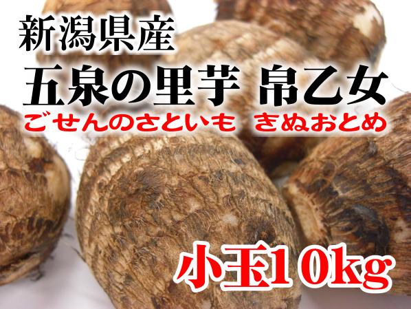 新潟県五泉産 帛乙女