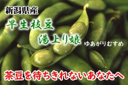 新潟県産 早生枝豆 湯上り娘