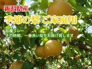 新潟県産 梨 ご家庭用