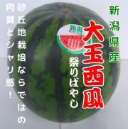 新潟県産 大玉西瓜 祭ばやし