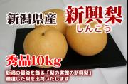 新潟県産 新興梨