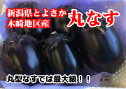 新潟県豊栄木崎地区産 丸なす