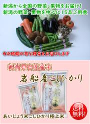 新潟県産野菜 果物 岩船産あいじょう米こしひかりセット