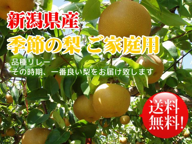 新潟県産 季節の梨