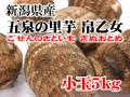新潟県 五泉産 帛乙女