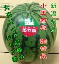 新潟県産 姫甘泉