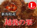 新潟県産 栗 村松