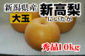 新潟県産 新高梨