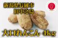 新潟県長岡市中之島 大口れんこん 4kg ※10月上旬出荷開始