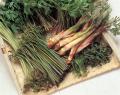 山菜セットイメージ