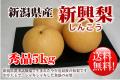 新潟県産 新興梨 秀品5kg