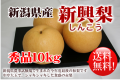 新潟県産 新興梨 秀品10kg