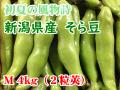 新潟県産そら豆