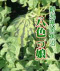 新潟県魚沼産八色っ娘