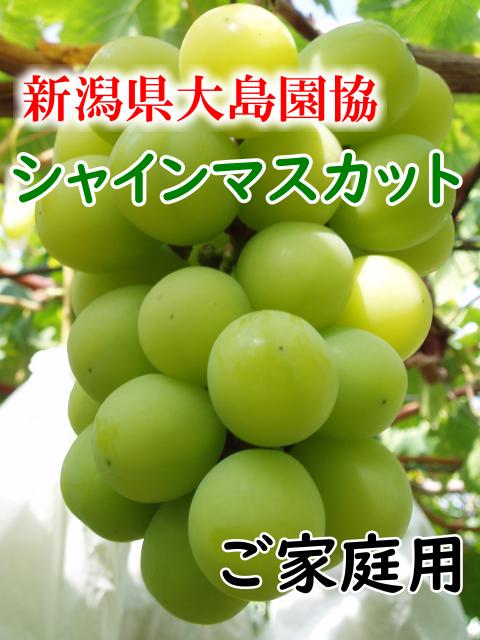 新潟県大島園協 シャインマスカット