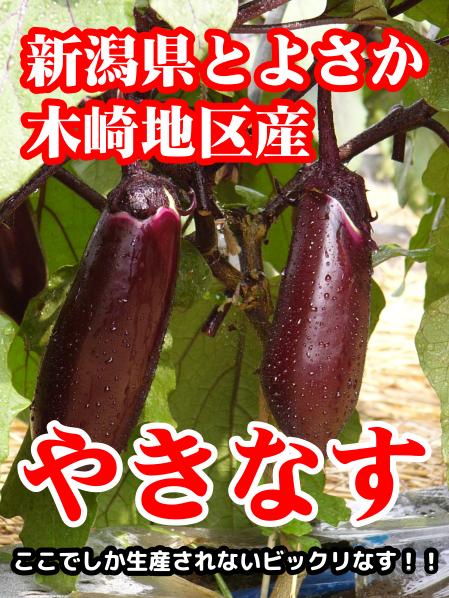新潟県豊栄木崎地区産 やきなす