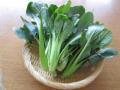 (タキイ種苗)べんり菜 20ml