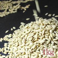 特別栽培米 会津産 減農薬 ササニシキ 1kg 放射能未検出
