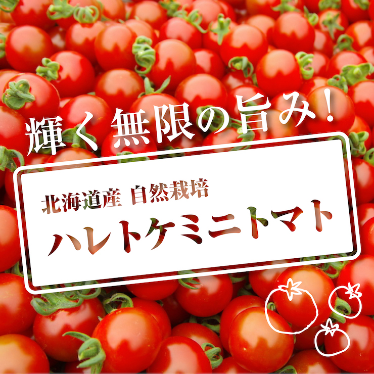 ハレトケミニトマト2021
