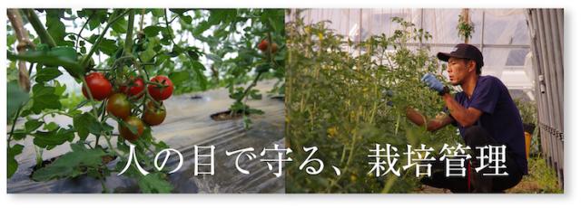 ミニトマト13
