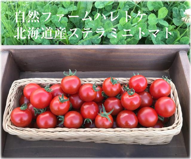 ミニトマト3