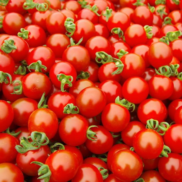 ミニトマトイメージ1