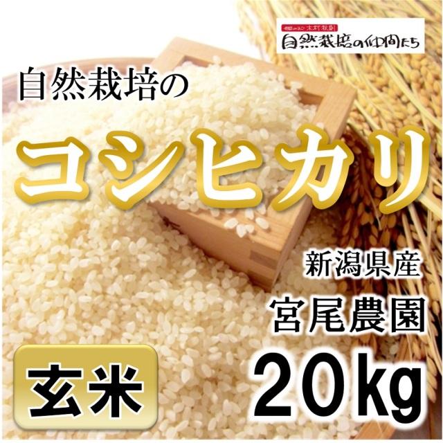 宮尾農園 玄米20kg
