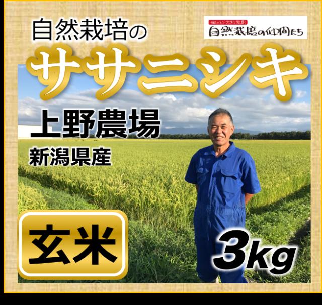 ササニシキ玄米3kg