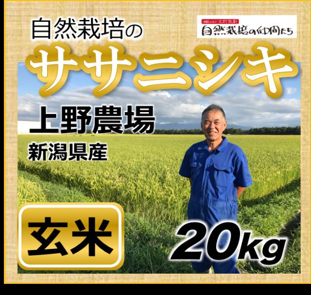 ササニシキ玄米20kg