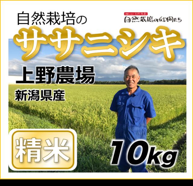 ササニシキ精米10kg
