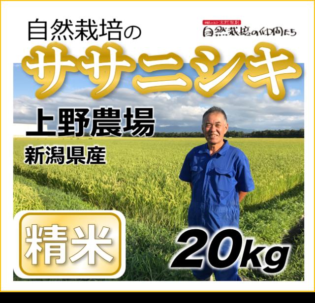 ササニシキ精米20kg