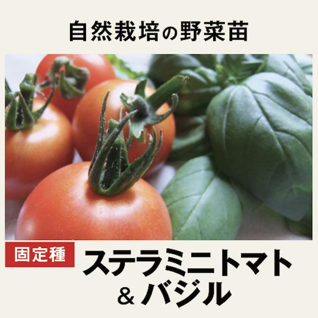 ミニトマト&バジル 野菜苗 トップ