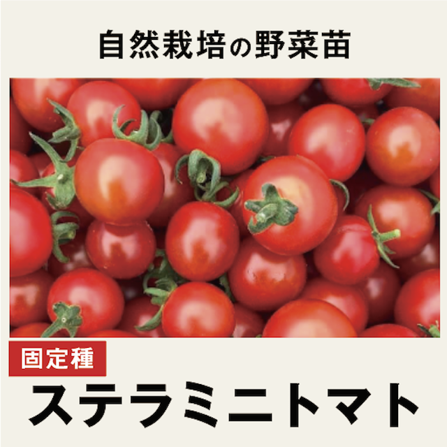 ミニトマト 野菜苗トップ