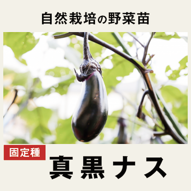 ナス 野菜苗 トップ