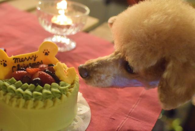 犬猫用☆クリスマスケーキ 12センチ【冷凍】