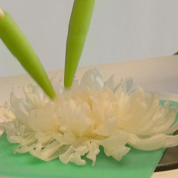 菊のブルーミング(開花)