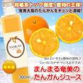 【奄美大島】たんかんジュース300mlまんまる工房【タンカン】【ジュース】