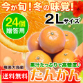 奄美大島たんかん/贈答用24個入り/2Lサイズ/タンカン/送料無料