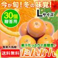 奄美大島たんかん/贈答用30個入り/Lサイズ/タンカン/送料無料